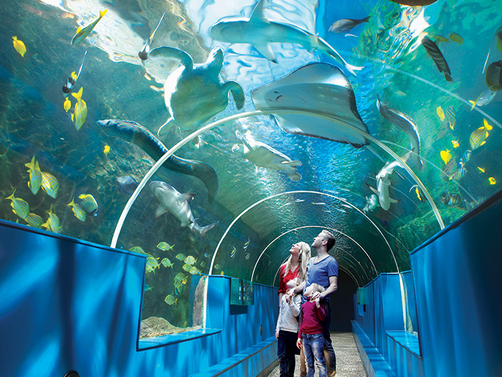 Family amazed by the array of sea life at the Oceanairum in Bournemouth