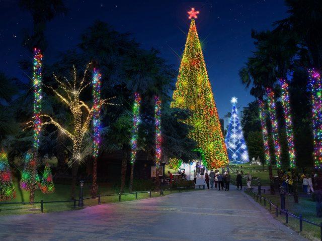 Christmas Tree Wonderland trail in the gardens