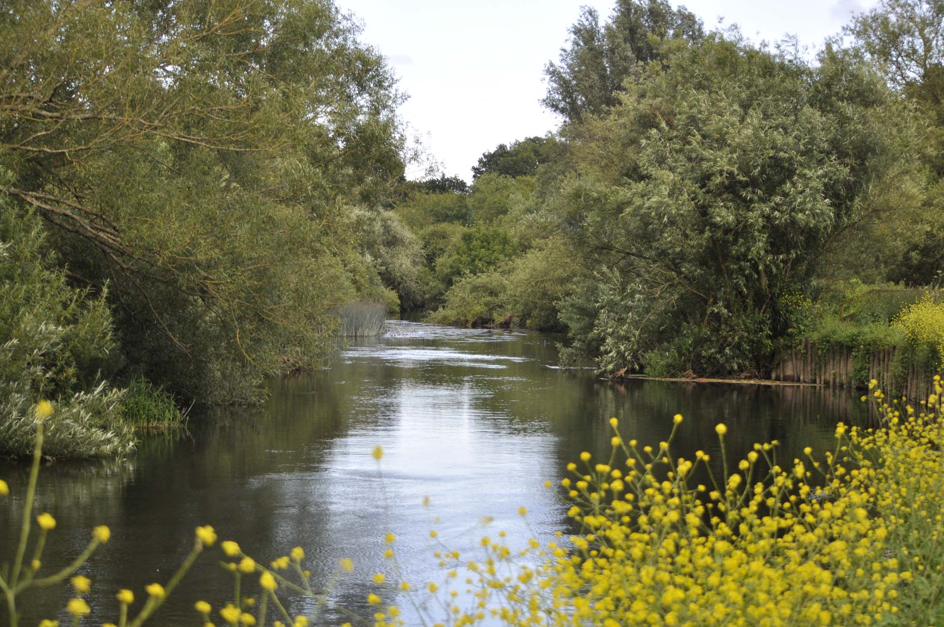 Beautiful stream at Stour Valley