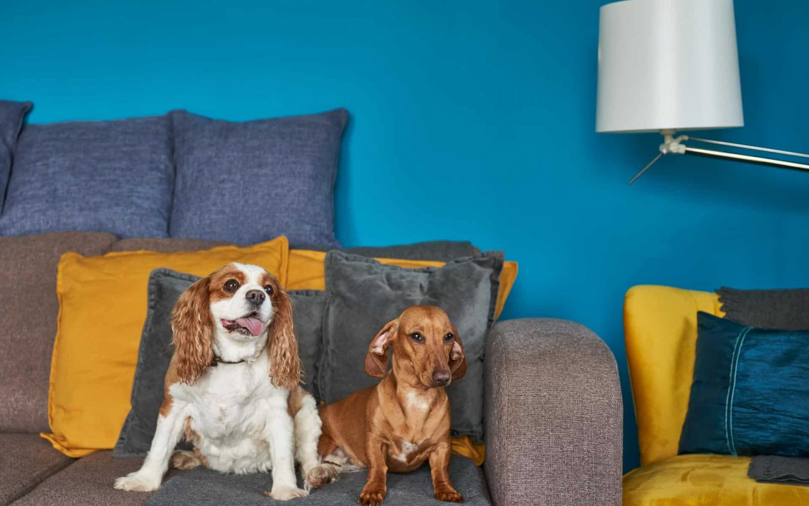 Two dogs posing for the camera whilst sat on the lodge sofa